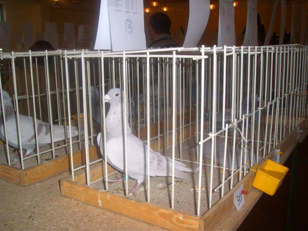 Wystawa oddziałowa 2008r.